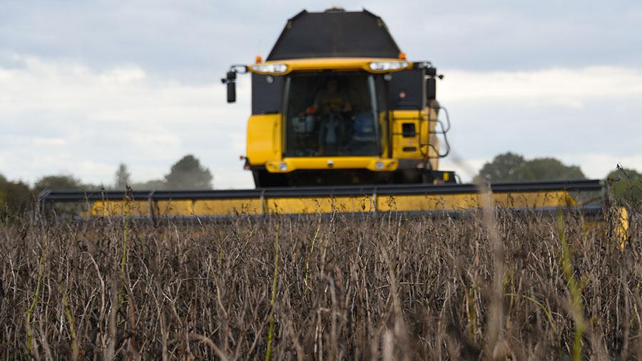 PGRO bean harvest